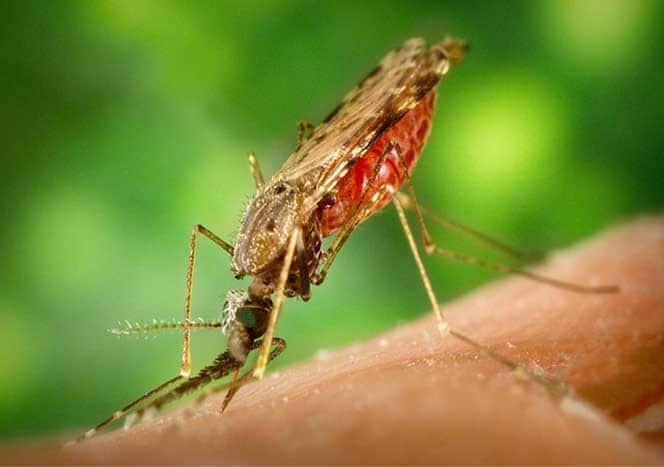 Mückenstichallergie: Allergische Reaktion gegen Mückenstiche
